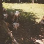 les mouton de kar a